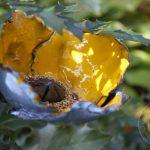 Mak ceramiczny żółty